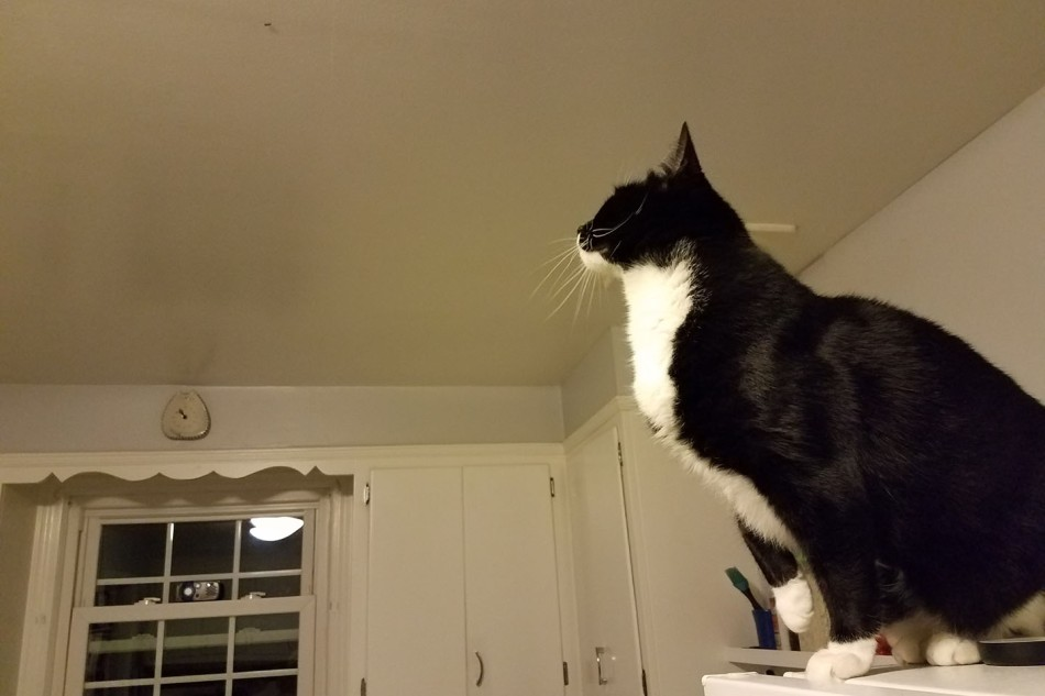 That time I walked into the kitchen and found Lola on top of the fridge, hunting a moth on the ceiling.